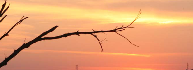 Tree branch against sunset
